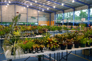 Tables of bromeliads